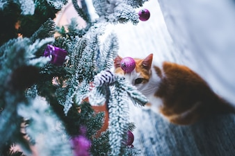 Ramas de un árbol de navidad con nieve y un gato