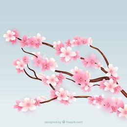 Ramas en flor del árbol del cerezo