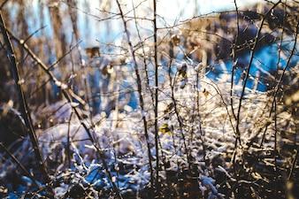 Ramas secas en la nieve