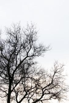 Ramo de árbol muerto contra el cielo azul (imagen filtrada procesado efecto vintage).