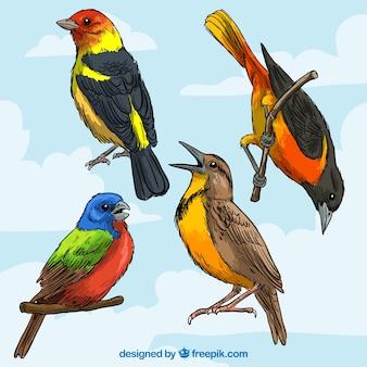 Razas de aves coloridas