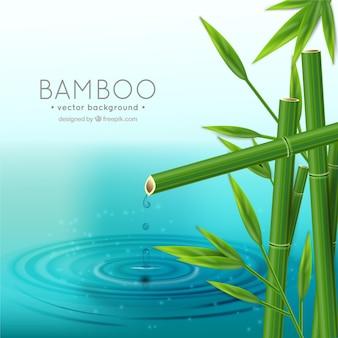Fondo de bambú realista
