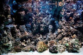 Rocas con musgo marino