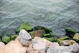 Rocas y algas costeras
