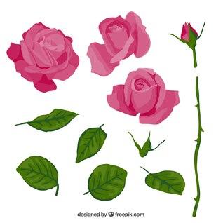 Rosa de color rosa en partes