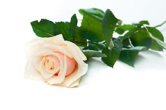 Rosa en una mesa