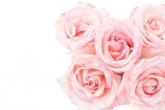 Rosa y rosa blanca