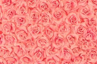 Rosas de fondo