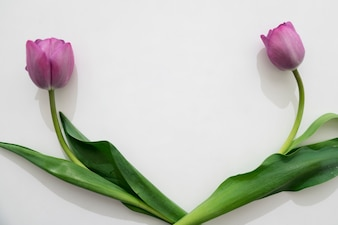 Rosas purpuras divididos