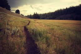 Ruta en el campo