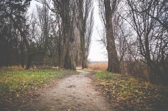 Ruta temporada de otoño