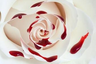 Sangre rose