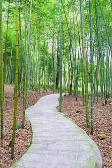 Sendero en un bosque de bambú