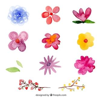 Conjunto de flores en estilo acuarela