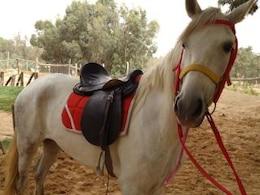silla hermoso caballo