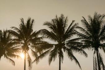 Silueta del árbol de coco