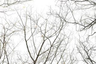 Silueta del árbol, desplácese