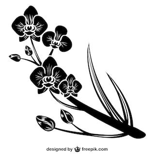Silueta negra de orquideas