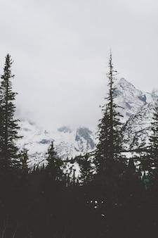 Siluetas de los árboles