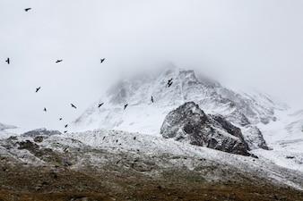 Siluetas de los pájaros que vuelan sobre la colina