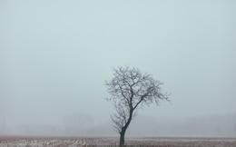 sin hojas árbol solitario y la niebla