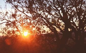 Sol brillando detrás de los árboles