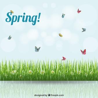Fondo primaveral con un prado
