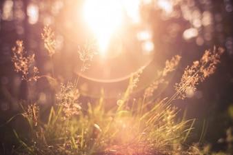 Sol brillando a través de la hierba