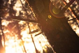 La luz del sol a través del árbol