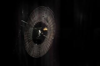 Telaraña sombra