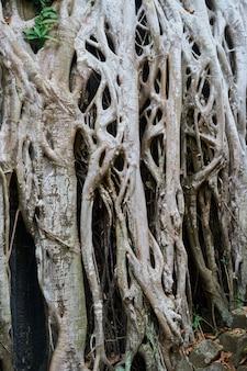 Templo y árboles de Angkor Wat