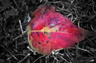 temporada de otoño arce octubre