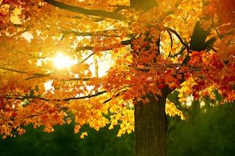 Temporada de otoño