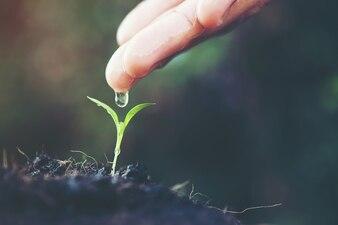 Terreno de juegos suelos jóvenes que crecen