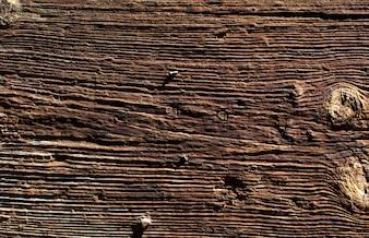 Textura cálida de madera