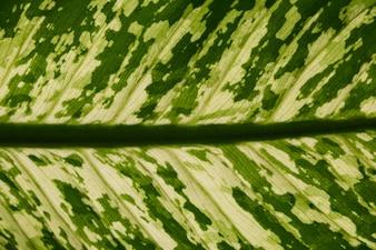 Textura de la hoja verde