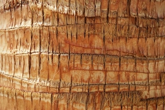 Textura de la palmera