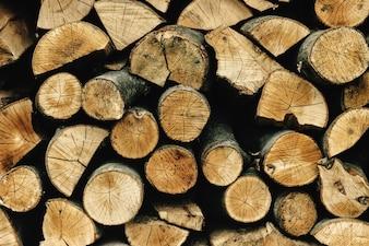 Textura de troncos cortados