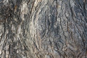 Textura de un tronco