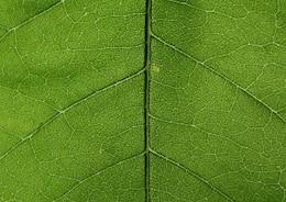 Textura dejar detalladas orgánicos