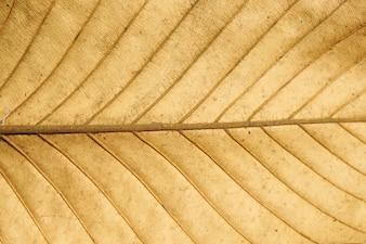 Textura y fondo de la hoja