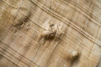 Textura y fondo del árbol