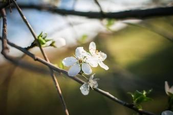Las pequeñas flores blancas del árbol