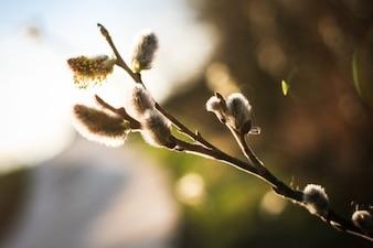 La primavera está aquí