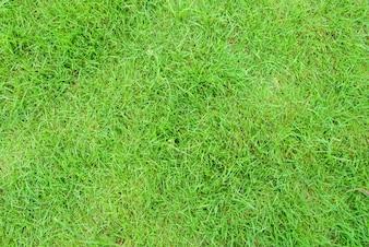 Tierra día hierba vista con textura