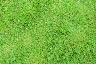 Tierra hierba prado resorte tapa