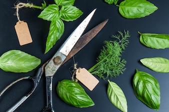 Tijeras con algunas hierbas aromáticas