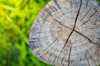 Tocón de un árbol