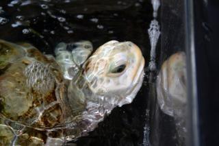 tortuga en la cuenca