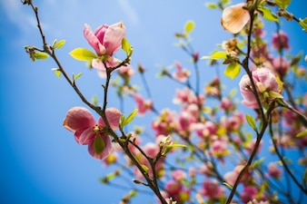 Flores de los árboles en flor